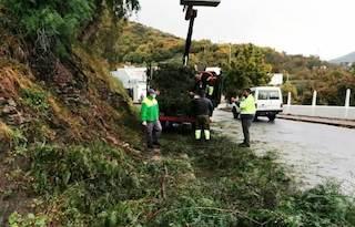 ALM Tree fallen onto Torrecuevas Road 20AP21