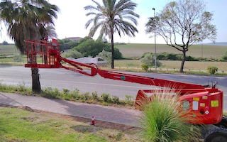 AND Cherry Picker Palm Prunning
