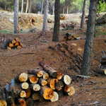 GRA Infoca Forest Clearing