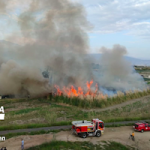 SAL Bullrush & Palm Fire 04AP21