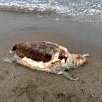 SAL Said Turtle on Beach AG21