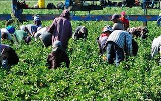 GRA Immigrant Farm Labourers